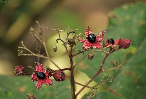 Wild flowers INW